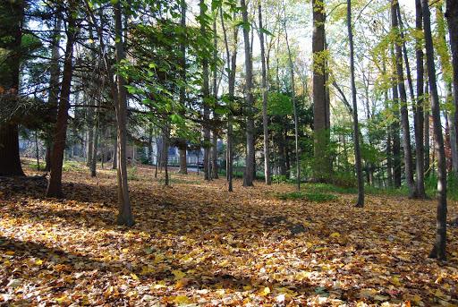 wooded lot on large estate organically maintained pound ridge westchester ny