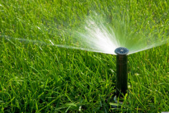 sprinkler on organic lawn bedford westchester ny