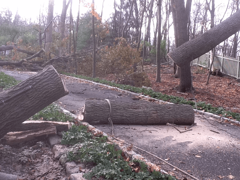 organic landscape property management removing storm damaged tree westchester ny fairfield county ct