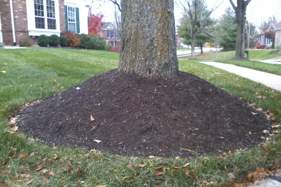 tree with volcano mulch, organic landscapes new york, westchester county