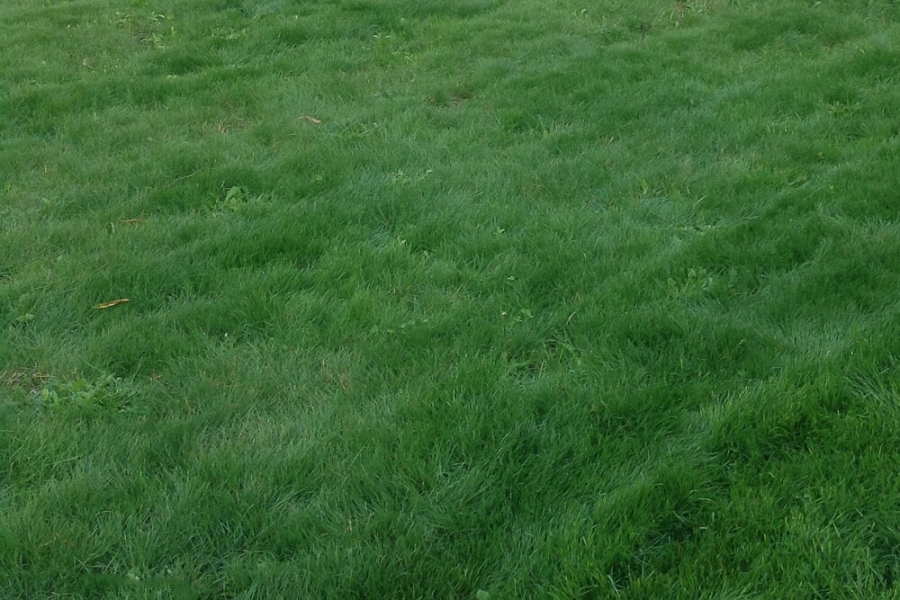 organic lawn green grass organic landscapes ny fairfield county ct westchester county ny